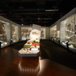 Exhibitions Conservation